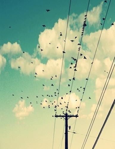 your birds